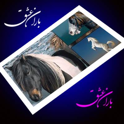 منتخبی از تصاویـر منتشر شده از نشنـال جئـوگرافیـک    www.mahdiba.tk   >>>  باران عشق
